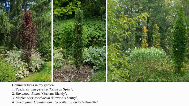 Columnar_plants