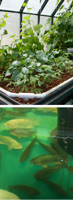 Plants,fish