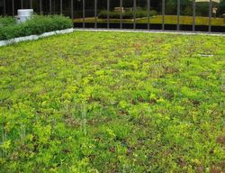 Greenroofs_image