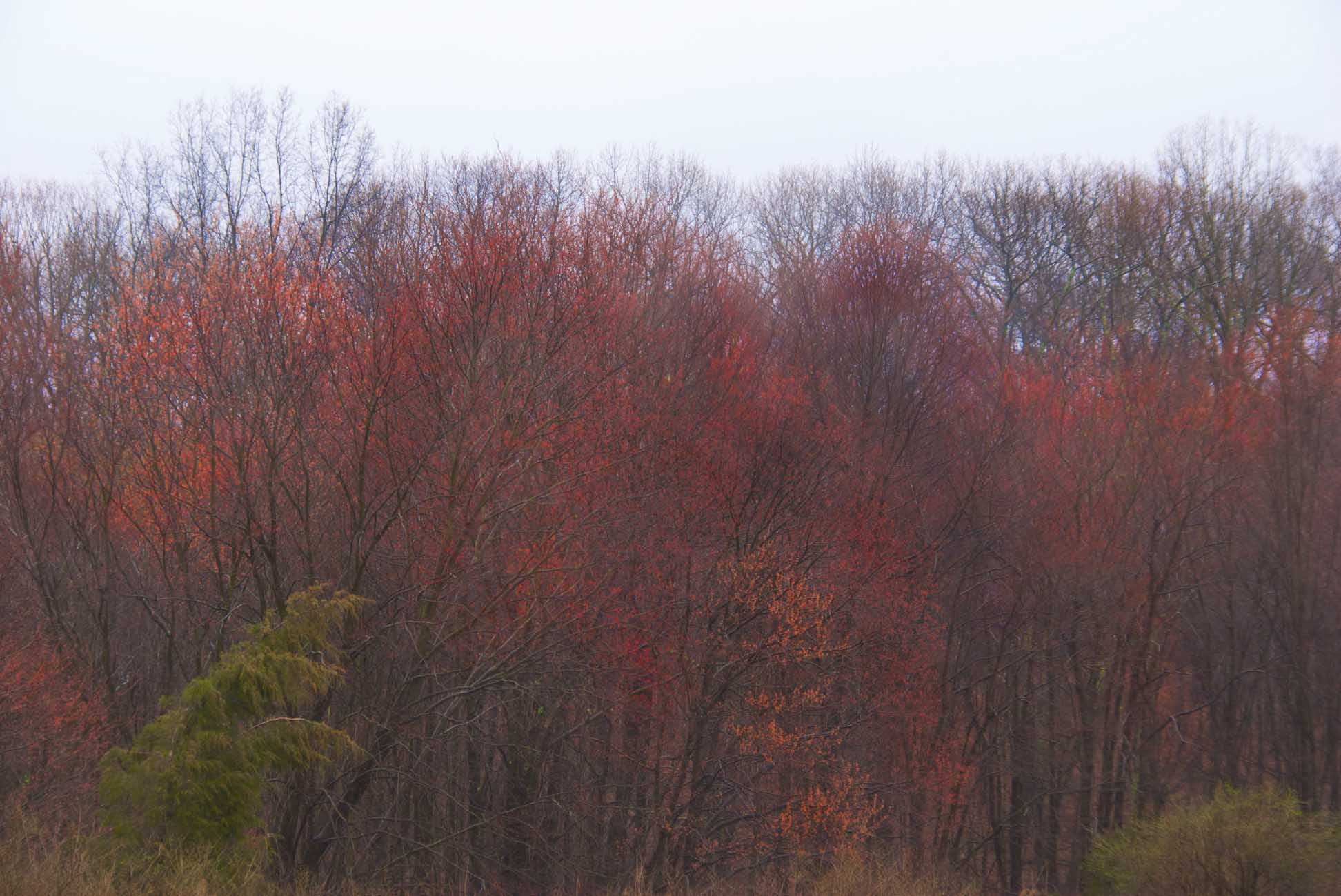 Red_maples_highway
