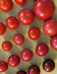 Tomato_sample