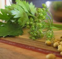 Cilantro_fruits