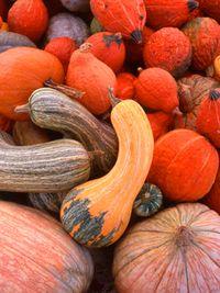 Squash_gourd_LR