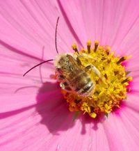 Bee_detail