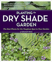 Planting-Dry-Shade-Garden