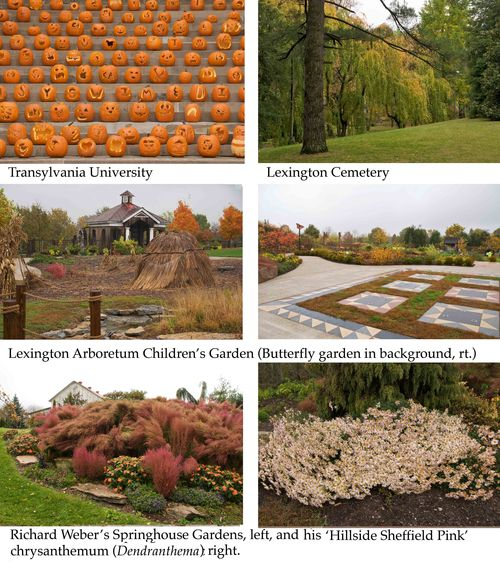 Lexington_gardens