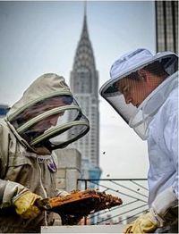 Bees_NY