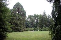 Giantsequoia_bwold